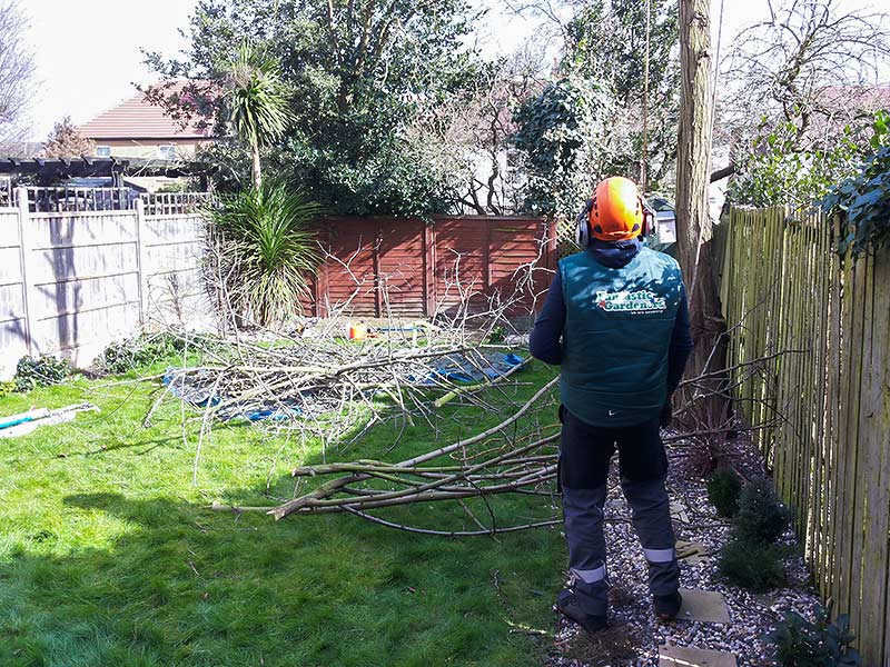 tree surgeon helping from the ground level