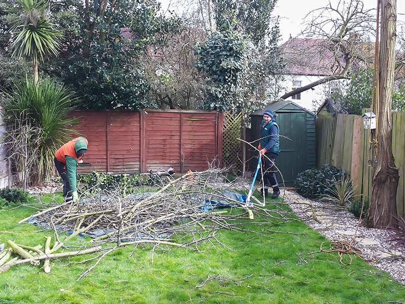arborists chopping branches
