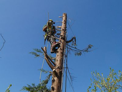 arborist on top of the tree reducing the trunk down