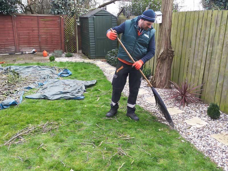 tree surgeon raking the grass