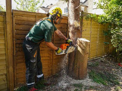 tree stump cutting