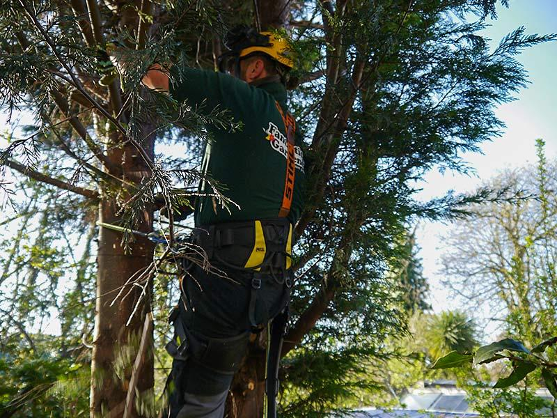 arborist on the tree