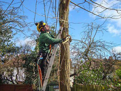 arborist climbing the ladder