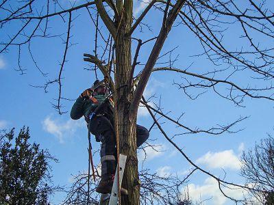 tree surgeon climbing the tree