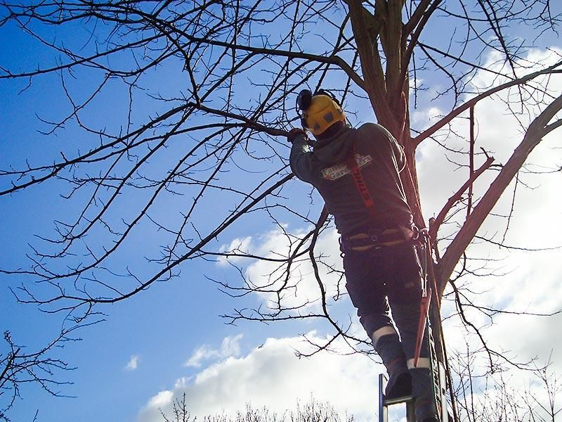 tree surgeon removing branches