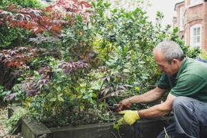 gardener pruning a bush
