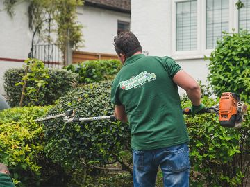 gardener trimming bushes