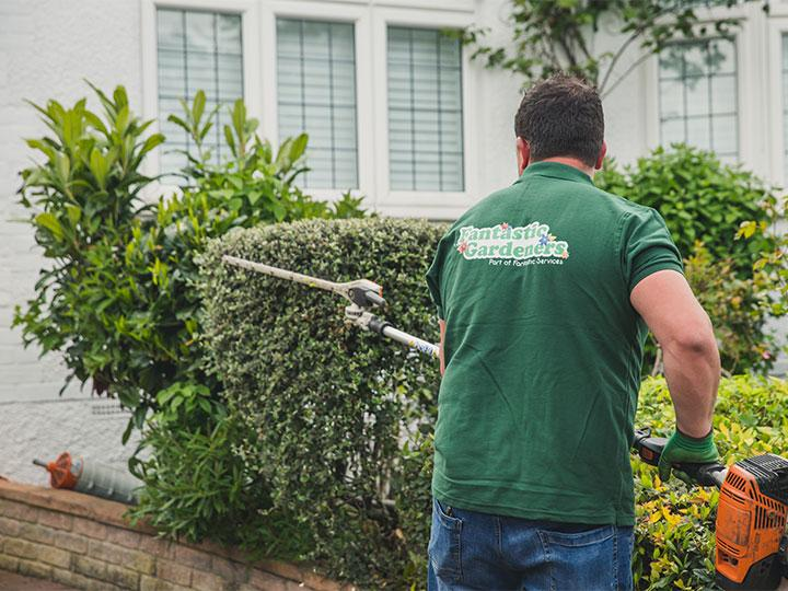 gardener trimming bushes in the front garden