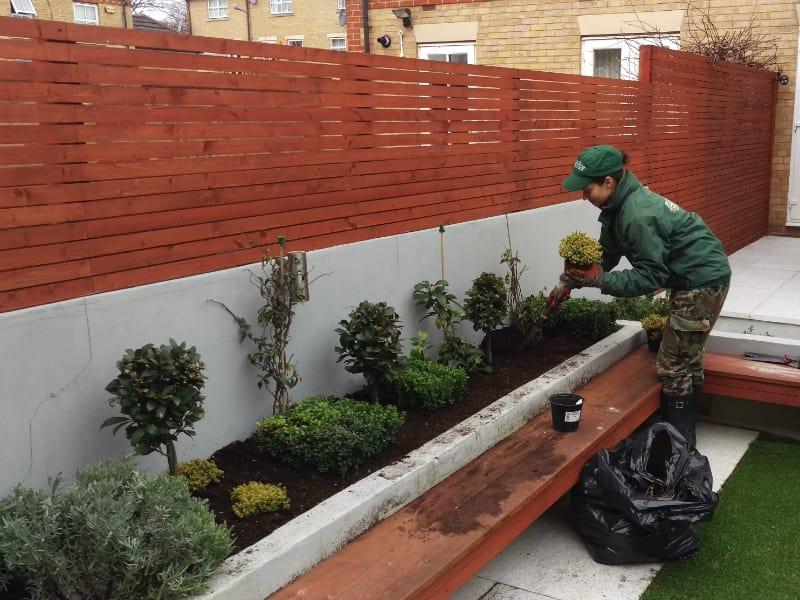 fulham gardener planting flowers