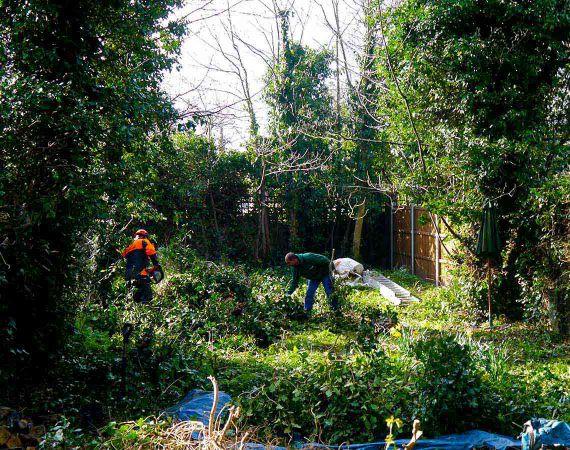 garden clearance service in progress
