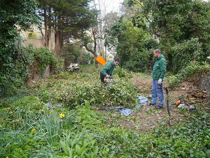 overgrown garden before the garden tidy up service