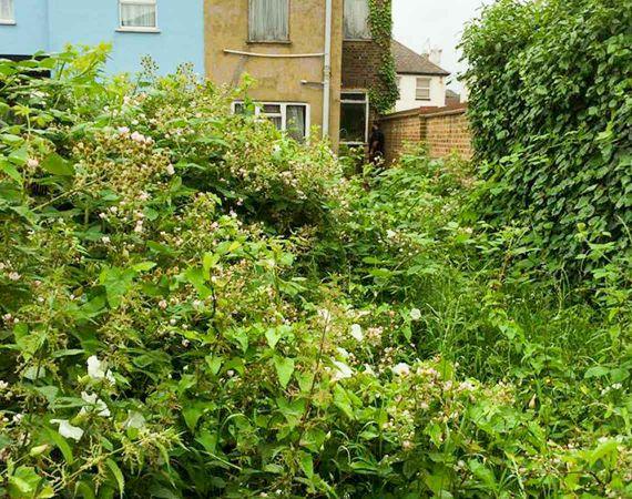 overgrown garden clearance