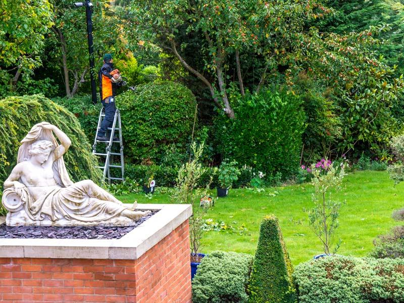 gardener trimming a large hedge