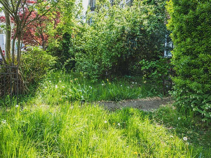 overgrown front garden