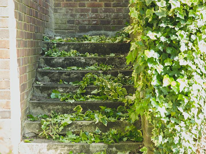 leaves on garden stairs before the service