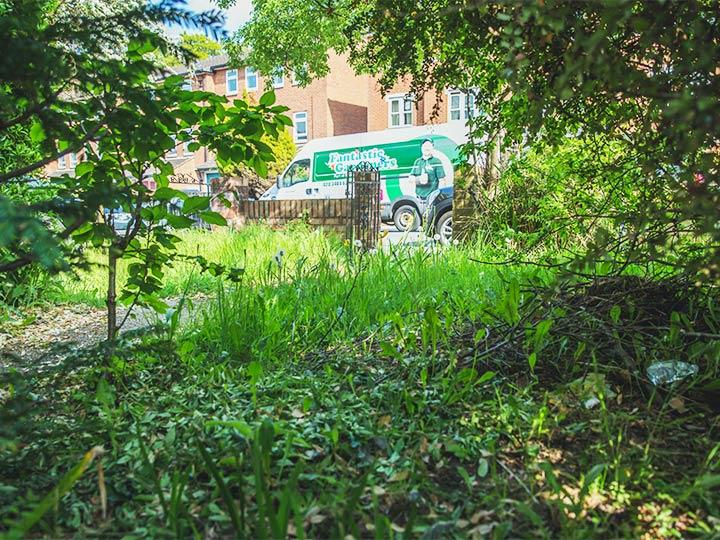 garden condition before maintenance in West Norwood