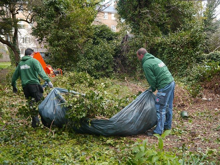 green waste collection in Islington