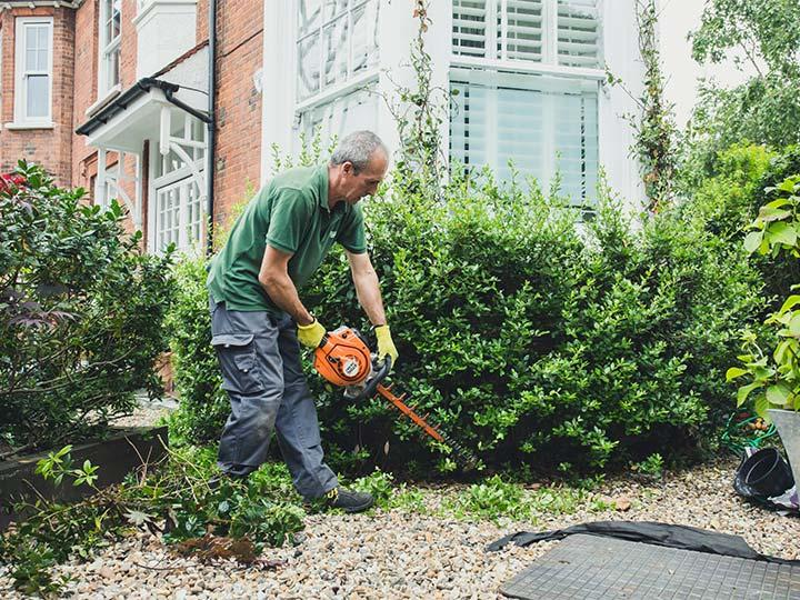 small hedge maintenance in clapham