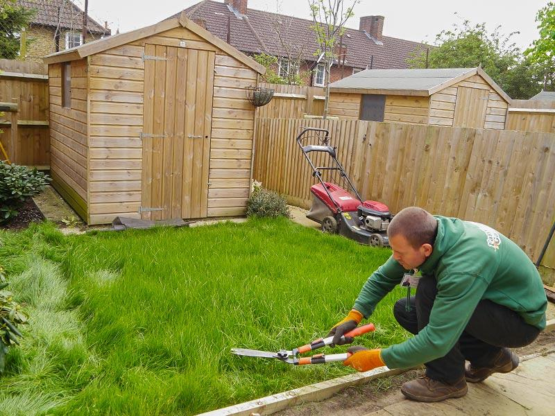 scissor trimming the lawn