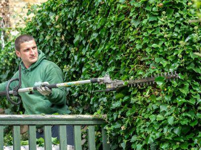 Landscaper Trimming a Large Hedge