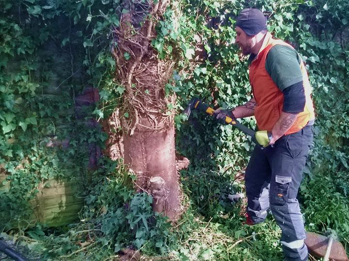 professional ivy removal