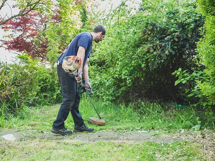 lawn care in progress
