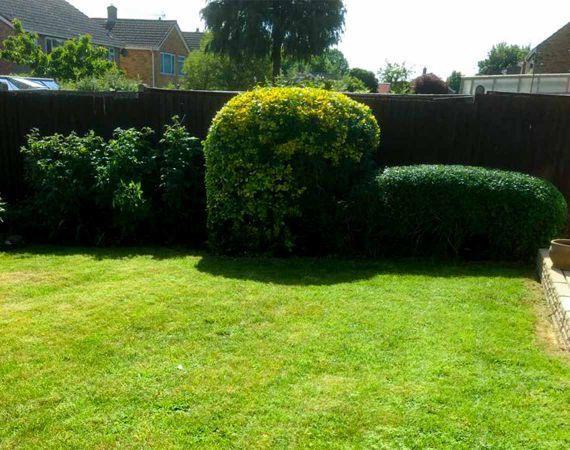 lawn mowing and trimmed bushes - after service