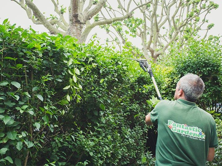 gardener trimming a hedge in a front garden