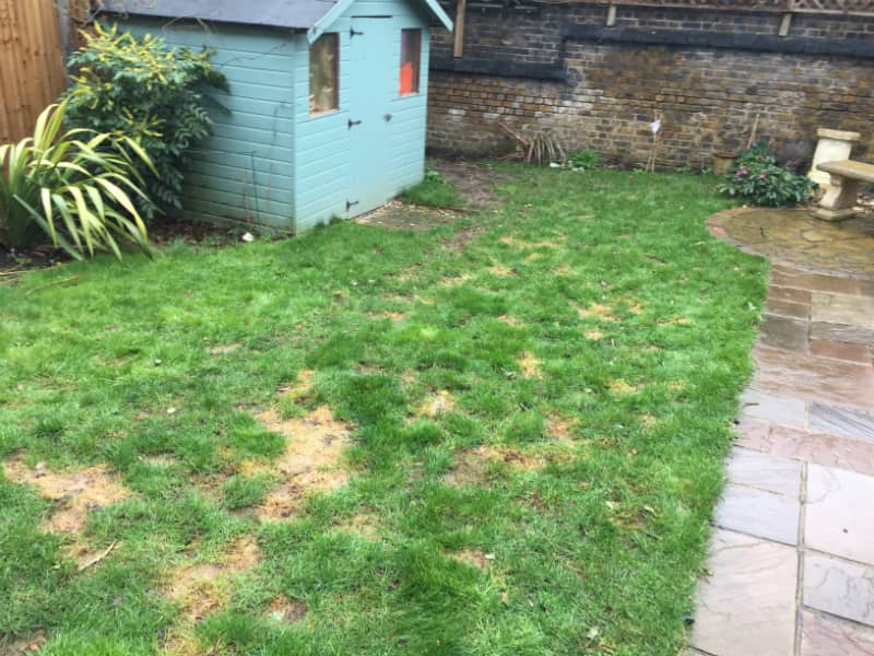 old turf in Ilford garden