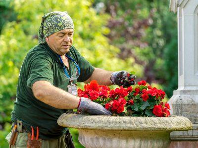 Gardener Planting Some New Flowers