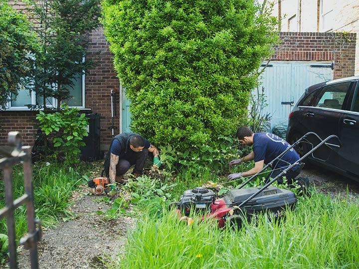 gardeners removing garden weeds in a West Norwood property