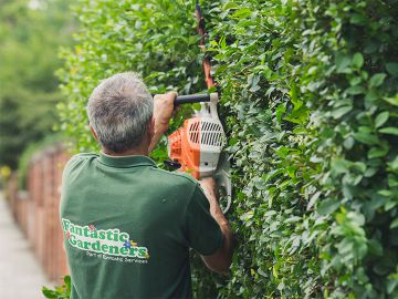 gardener shaping a hedge in clapham