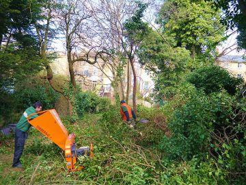 shredding tree branches is Islington