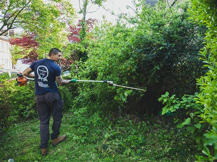 gardener cutting a tree
