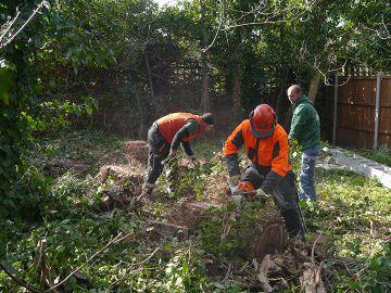 tree cutting in Islington