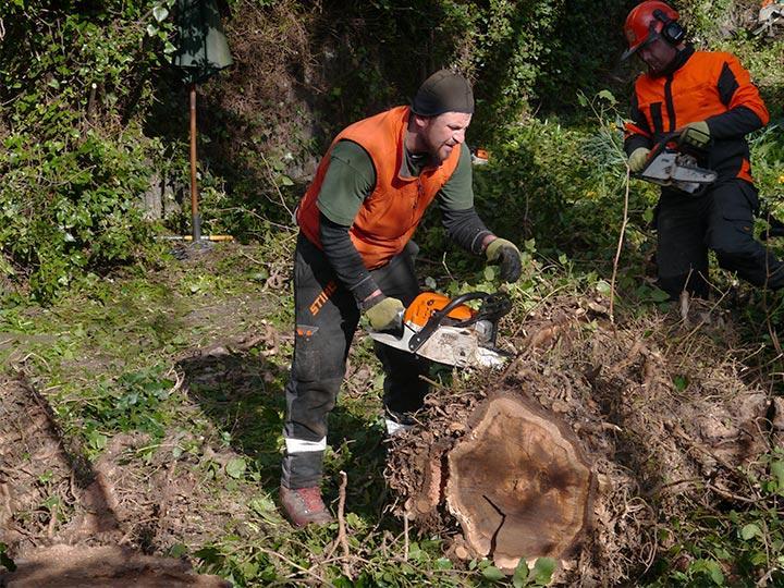 tree surgeon cutting a tree