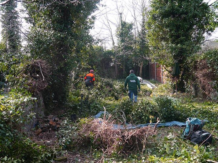 tree surgeons in Islington