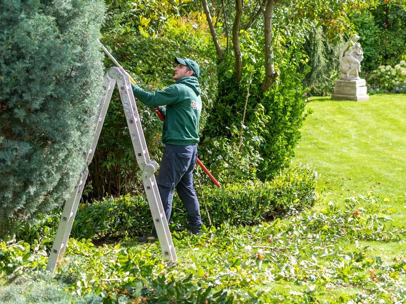 tree trimming in croydon cr0