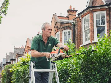 gardener on a ladder shaping a hedge