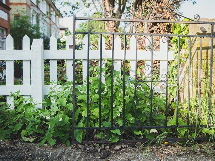 overgrown greenery near a garden fence