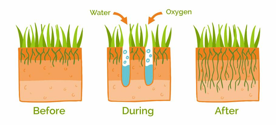 lawn aeration process and effect visualised