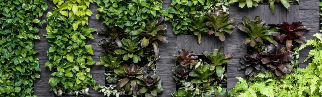 a green wall