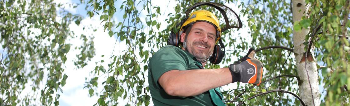 Tree Surgeon On Tree